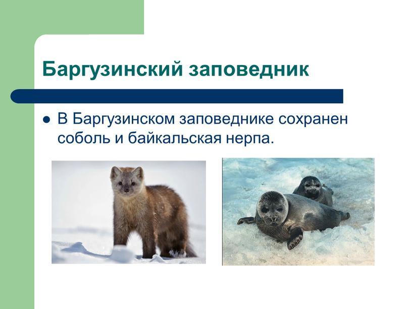 Баргузинский заповедник В Баргузинском заповеднике сохранен соболь и байкальская нерпа