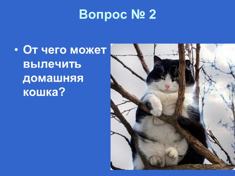 Вопрос № 2 От чего может вылечить домашняя кошка?