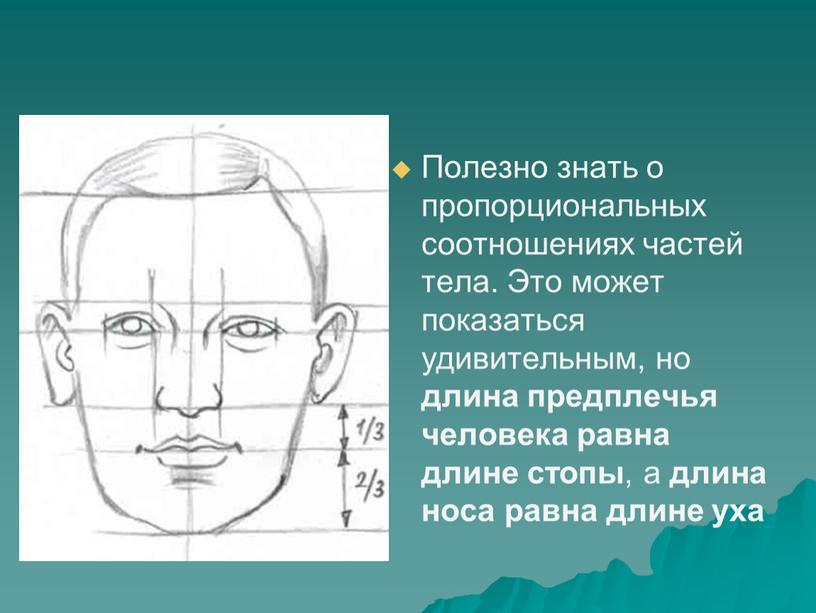 Полезно знать о пропорциональных соотношениях частей тела