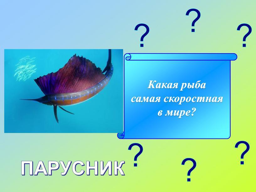 Какая рыба самая скоростная в мире?