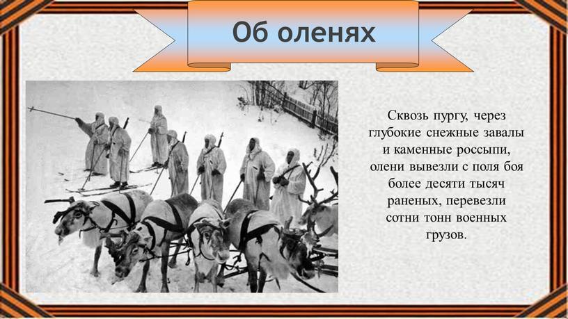 Сквозь пургу, через глубокие снежные завалы и каменные россыпи, олени вывезли с поля боя более десяти тысяч раненых, перевезли сотни тонн военных грузов