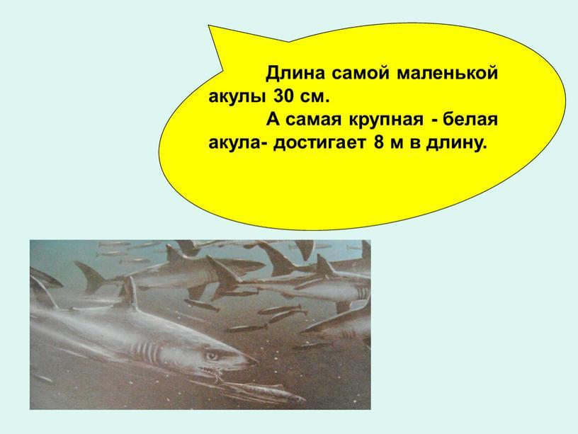 Длина самой маленькой акулы 30 см