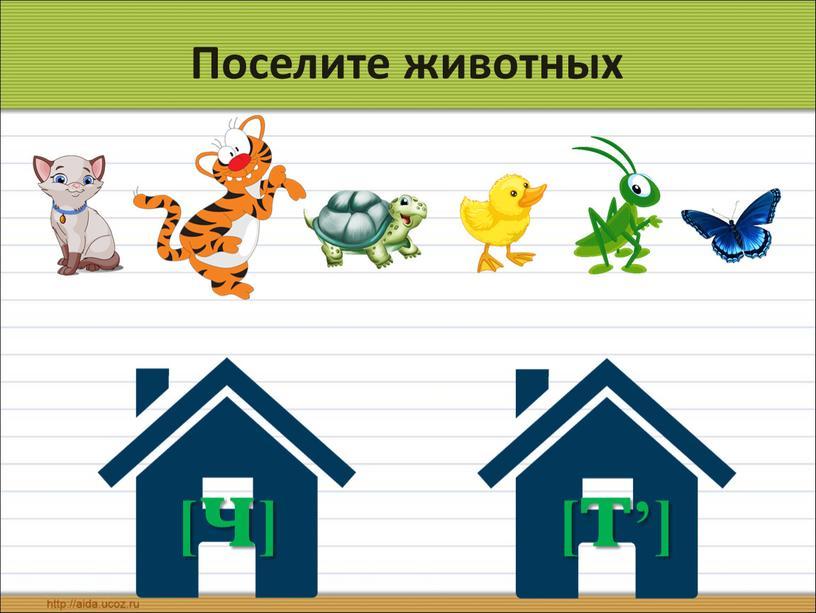 Поселите животных [т'] [ч]