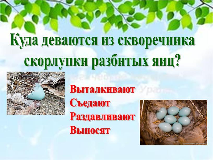 Куда деваются из скворечника скорлупки разбитых яиц?