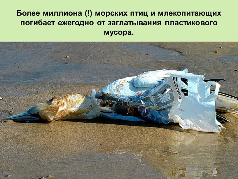 Более миллиона (!) морских птиц и млекопитающих погибает ежегодно от заглатывания пластикового мусора