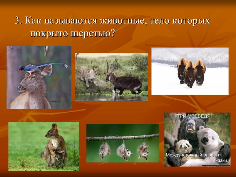 Как называются животные, тело которых покрыто шерстью?