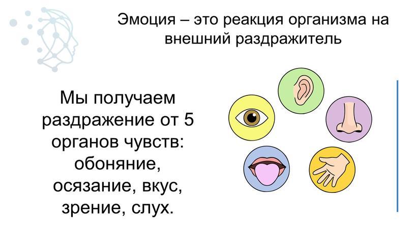 Мы получаем раздражение от 5 органов чувств: обоняние, осязание, вкус, зрение, слух