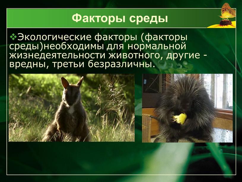 Факторы среды Экологические факторы (факторы среды)необходимы для нормальной жизнедеятельности животного, другие - вредны, третьи безразличны