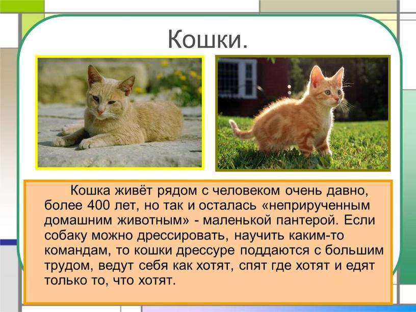 Кошки. Кошка живёт рядом с человеком очень давно, более 400 лет, но так и осталась «неприрученным домашним животным» - маленькой пантерой