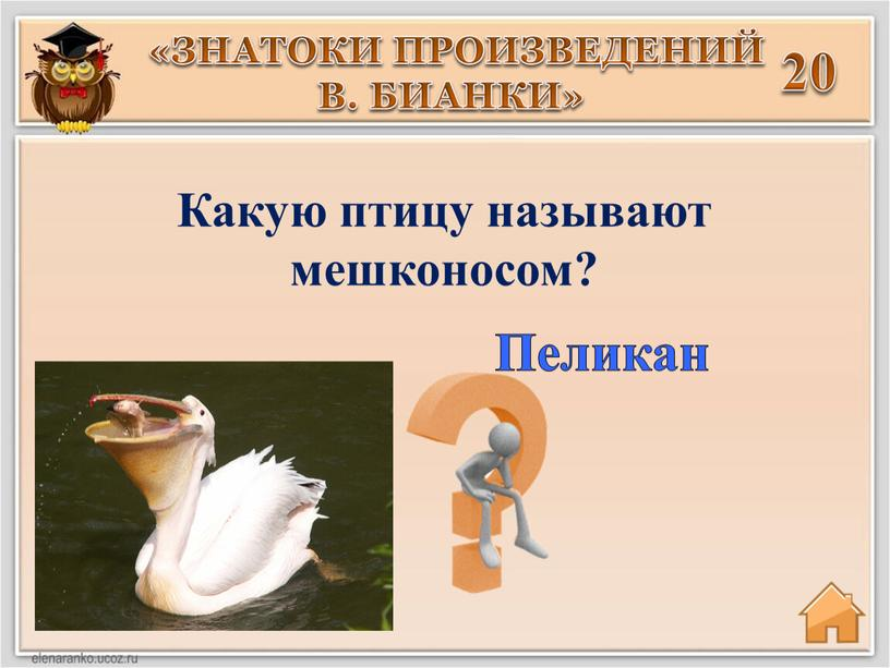 Какую птицу называют мешконосом?