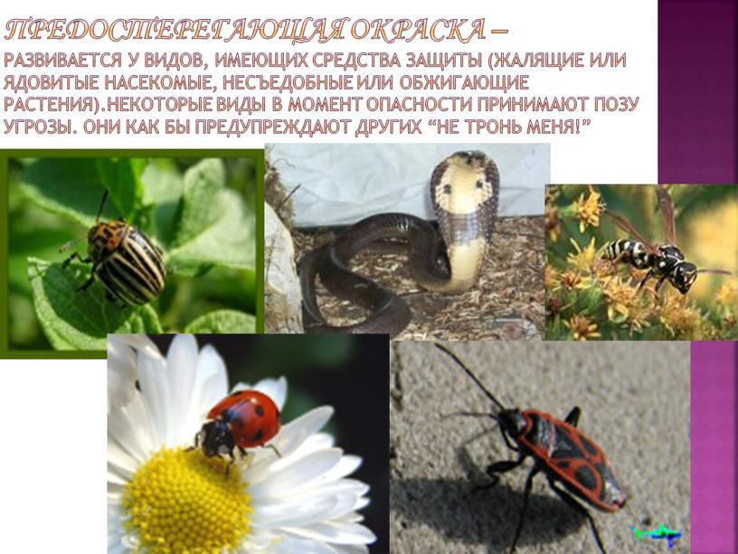 Предостерегающая окраска – развивается у видов, имеющих средства защиты (жалящие или ядовитые насекомые, несъедобные или обжигающие растения)