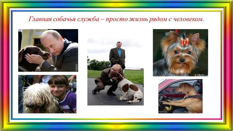 Главная собачья служба – просто жизнь рядом с человеком