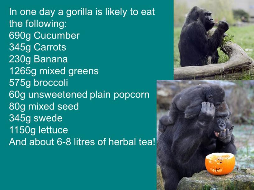 In one day a gorilla is likely to eat the following: 690g