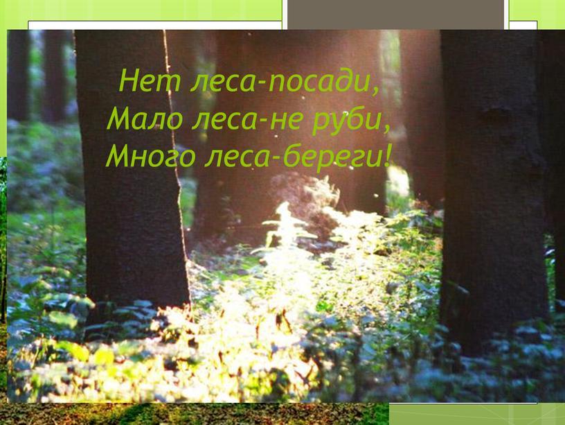 Нет леса-посади, Мало леса-не руби,