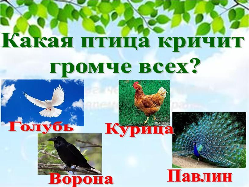Какая птица кричит громче всех?