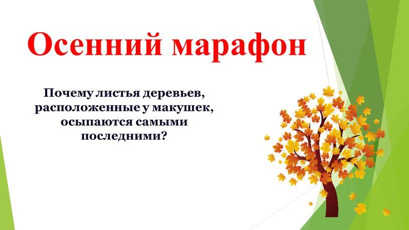 Осенний марафон Почему листья деревьев, расположенные у макушек, осыпаются самыми последними?