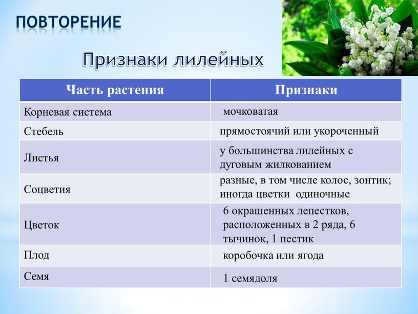 Признаки лилейных Часть растения