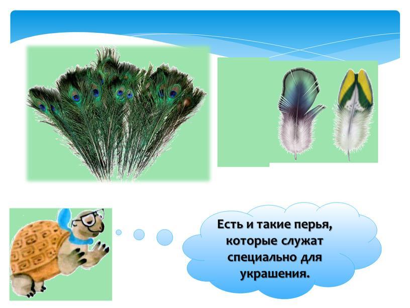 Есть и такие перья, которые служат специально для украшения
