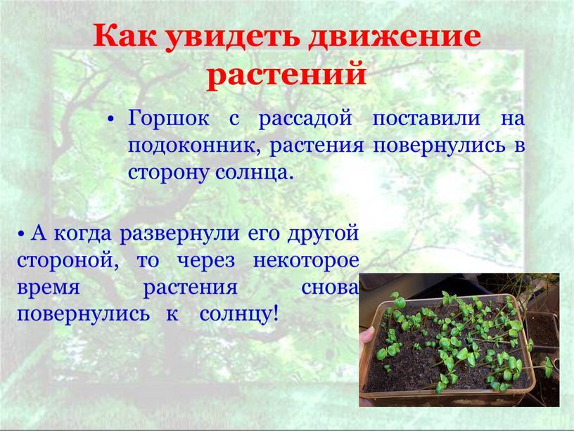 Как увидеть движение растений Горшок с рассадой поставили на подоконник, растения повернулись в сторону солнца