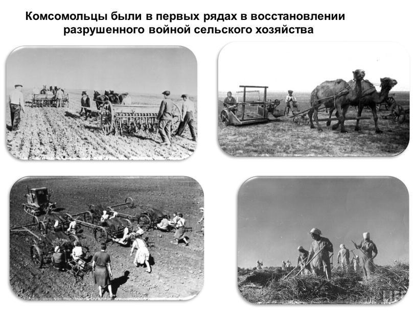 Комсомольцы были в первых рядах в восстановлении разрушенного войной сельского хозяйства