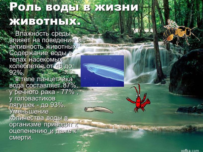 Роль воды в жизни животных. Влажность среды влияет на поведение и активность животных