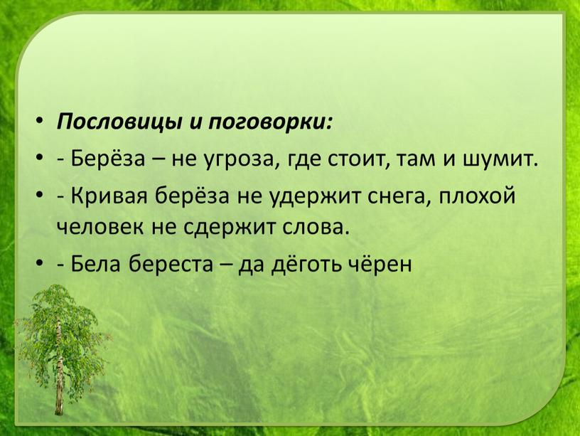 Пословицы и поговорки: - Берёза – не угроза, где стоит, там и шумит