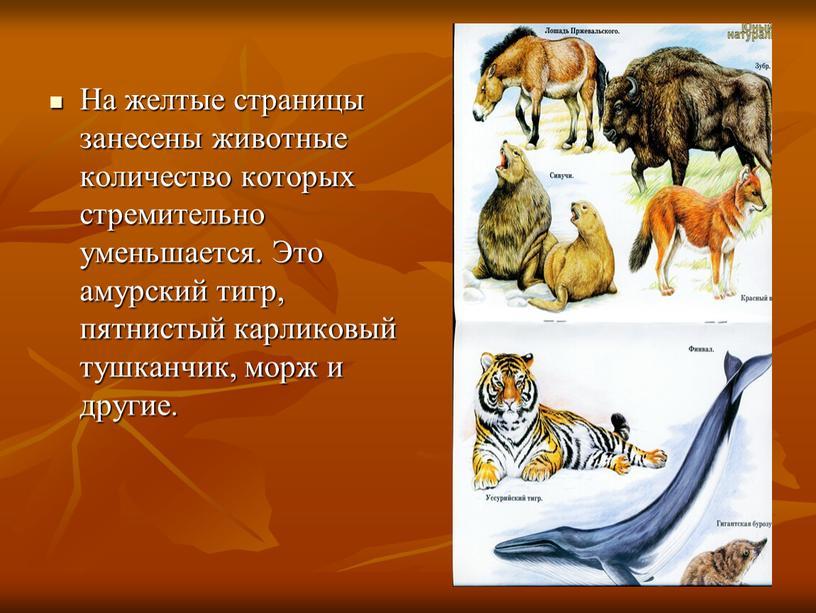 На желтые страницы занесены животные количество которых стремительно уменьшается