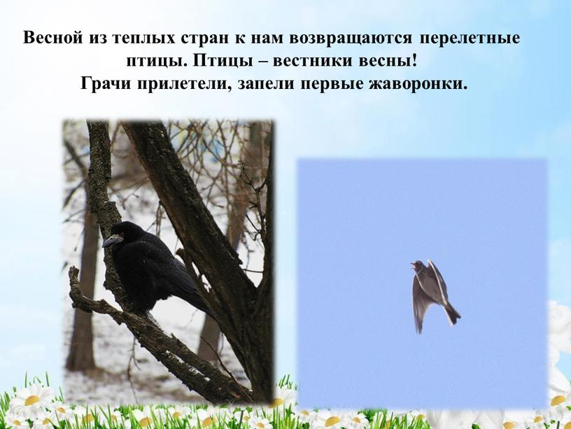Весной из теплых стран к нам возвращаются перелетные птицы