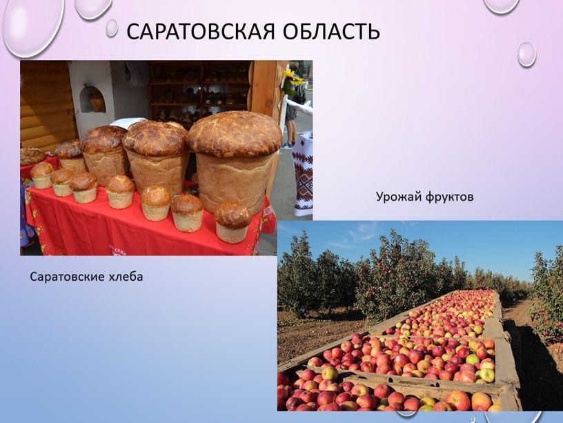 Саратовская область Саратовские хлеба