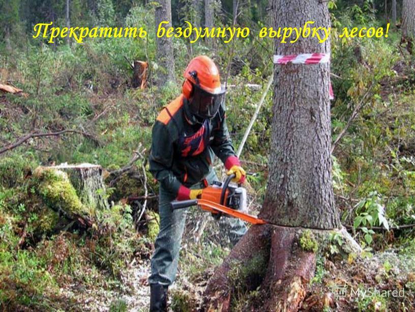 Прекратить бездумную вырубку лесов!