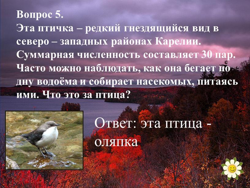 Вопрос 5. Эта птичка – редкий гнездящийся вид в северо – западных районах