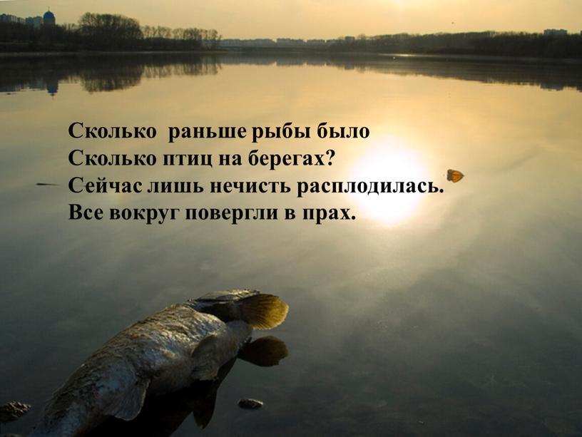 Сколько раньше рыбы было Сколько птиц на берегах?