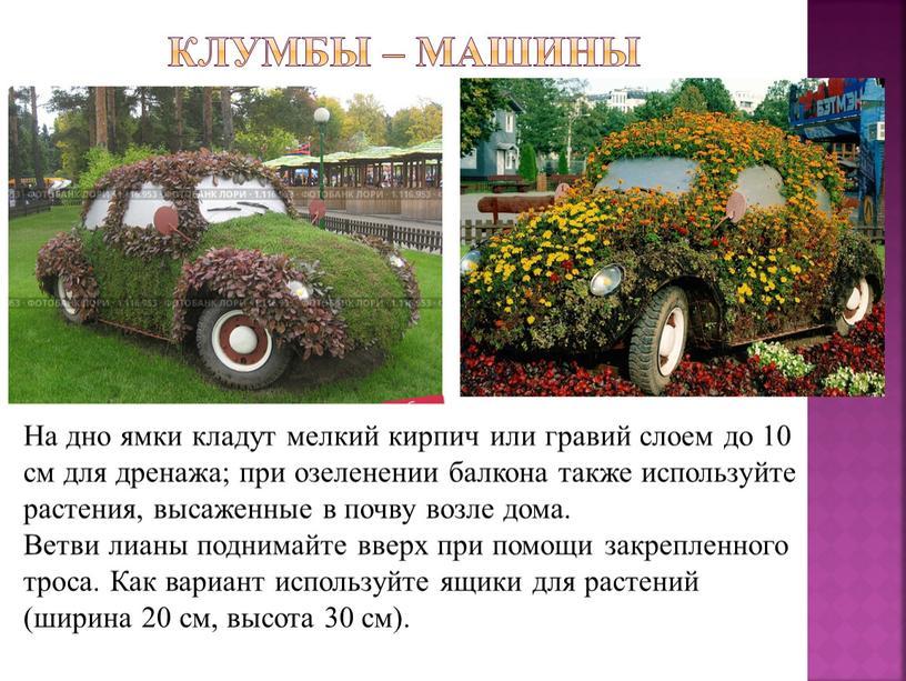 Машины На дно ямки кладут мелкий кирпич или гравий слоем до 10 см для дренажа; при озеленении балкона также используйте растения, высаженные в почву возле…