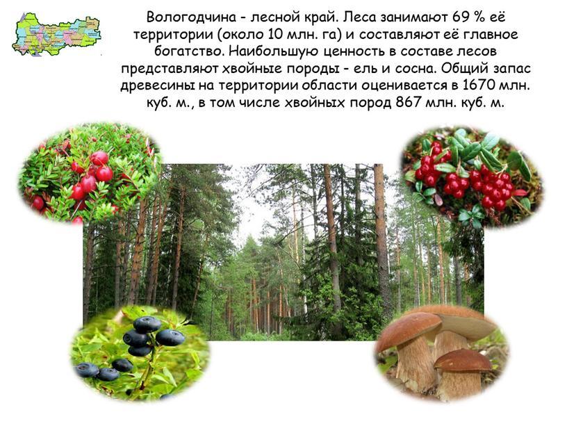 Вологодчина - лесной край. Леса занимают 69 % её территории (около 10 млн