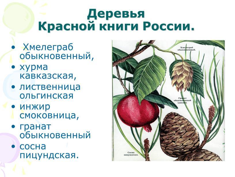 Деревья Красной книги России
