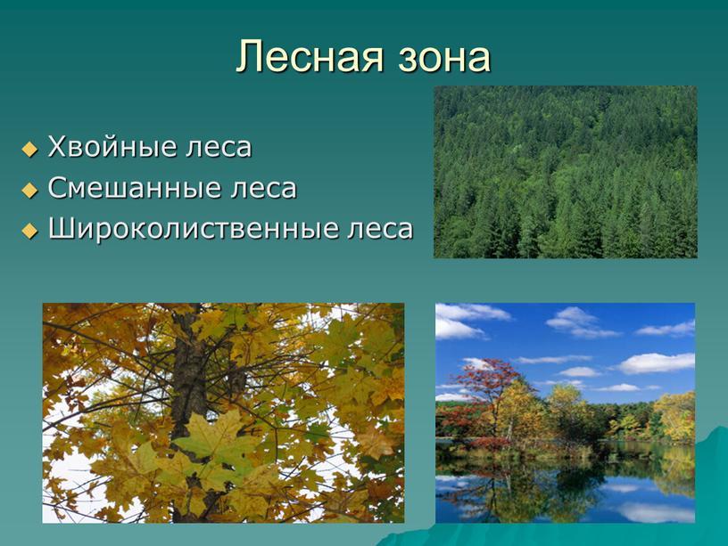 Лесная зона Хвойные леса Смешанные леса
