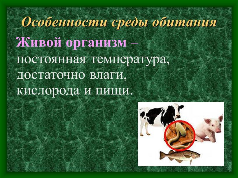 Особенности среды обитания постоянная температура, достаточно влаги, кислорода и пищи