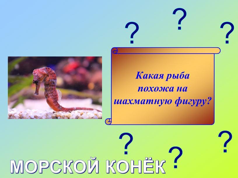 Какая рыба похожа на шахматную фигуру?