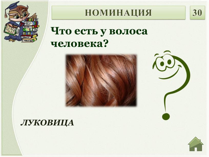 ЛУКОВИЦА Что есть у волоса человека?