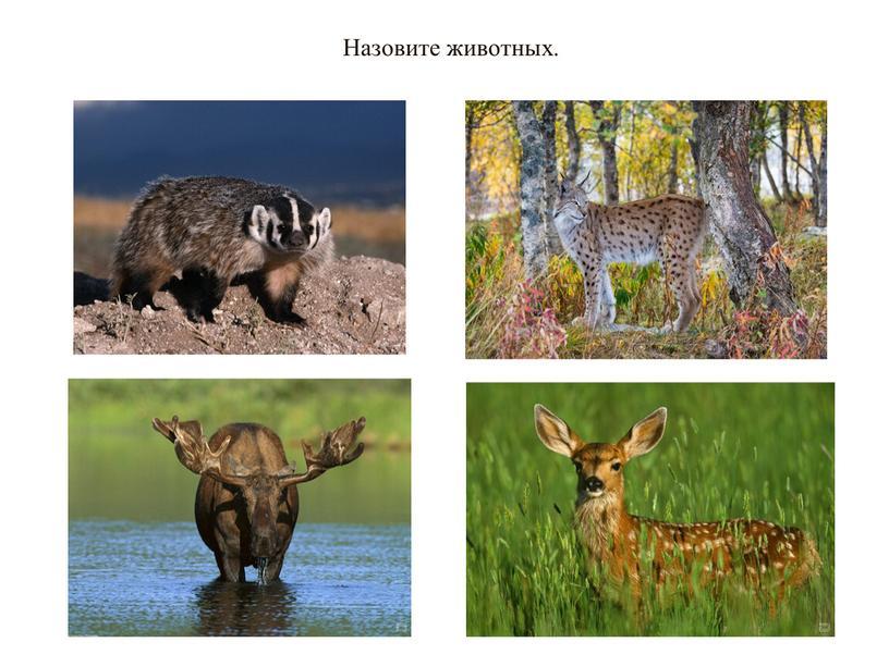 Назовите животных.
