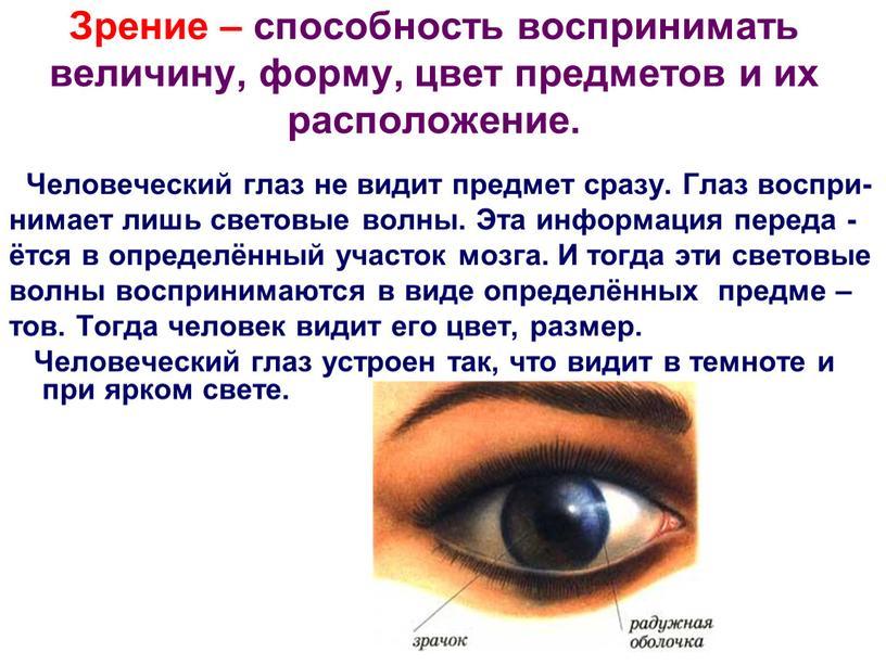 Зрение – способность воспринимать величину, форму, цвет предметов и их расположение