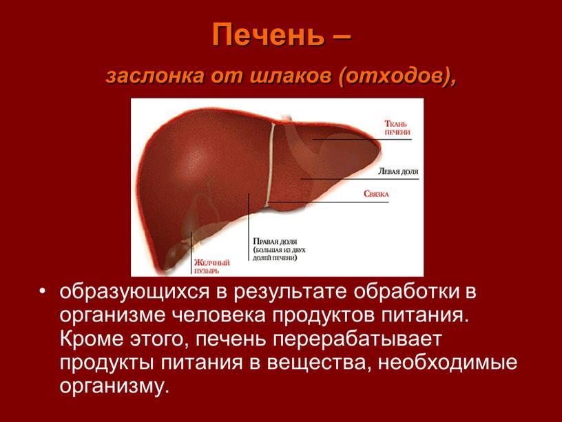 Печень – заслонка от шлаков (отходов), образующихся в результате обработки в организме человека продуктов питания