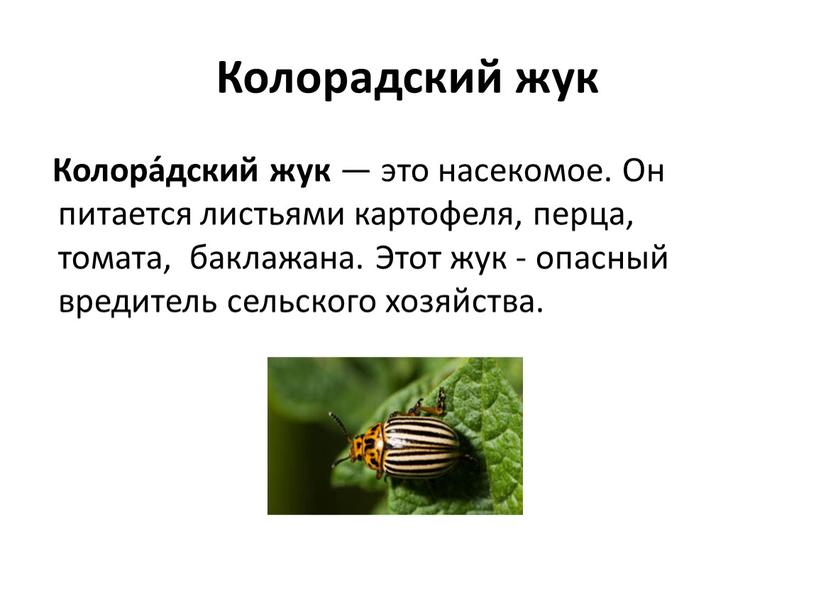 Колорадский жук Колора́дский жук — это насекомое