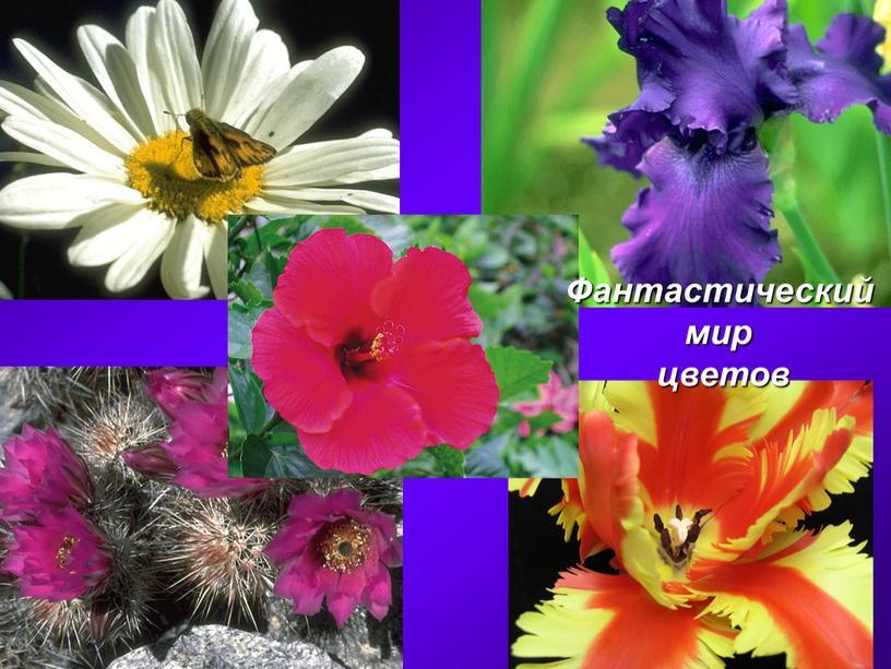 Фантастический мир цветов