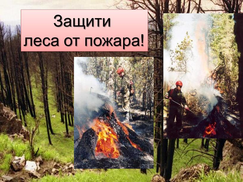 Защити леса от пожара! 26