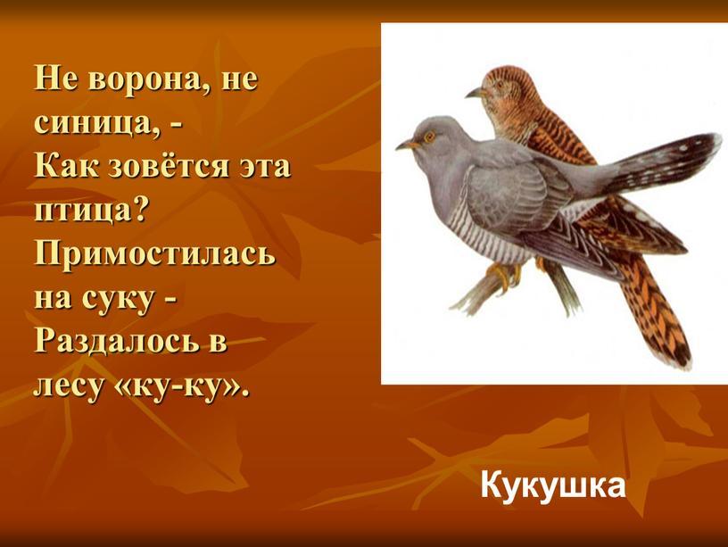 Не ворона, не синица, - Как зовётся эта птица?
