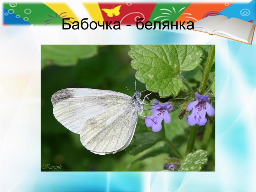Бабочка - белянка