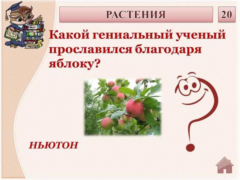 НЬЮТОН Какой гениальный ученый прославился благодаря яблоку?