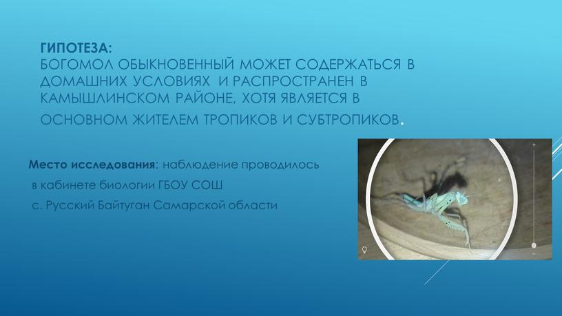 Гипотеза: богомол обыкновенный может содержаться в домашних условиях и распространен в