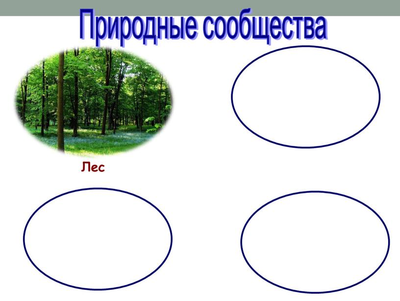 Лес Природные сообщества